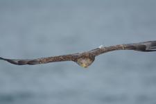 流氷とオジロワシの画像125