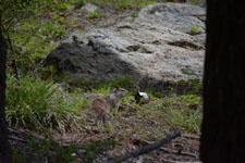 ヨセミテ国立公園のリスの画像001