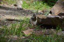 ヨセミテ国立公園のリスの画像008