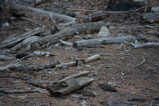 ヨセミテ国立公園のリスの画像013