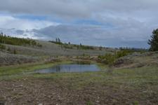 イエローストーン国立公園の草原の画像001