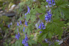剣山の花の画像004