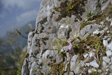 剣山の花の画像005