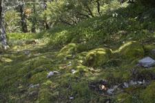 剣山の森の画像001