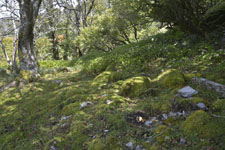 剣山の森の画像002