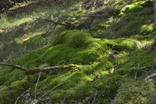 剣山の森の画像003