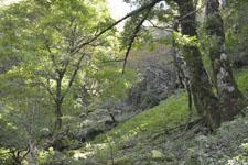 剣山の森の画像004