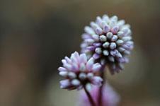 馬路村の花の画像002