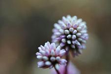 馬路村の花の画像003