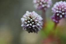 馬路村の花の画像004