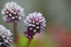 馬路村の花の画像005