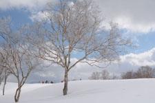 雪原にたたずむ木の画像003