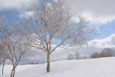 雪原にたたずむ木の画像004