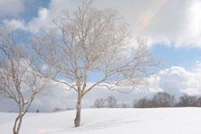 雪原にたたずむ木の画像005