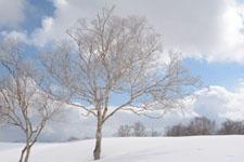 雪原にたたずむ木の画像006