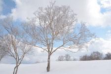雪原にたたずむ木の画像007
