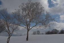 雪原にたたずむ木の画像008