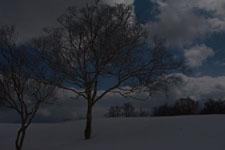 雪原にたたずむ木の画像009