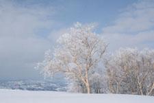 雪原にたたずむ木の画像010