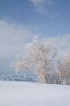 雪原にたたずむ木の画像012