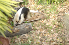 上野動物園のコアリクイの画像007