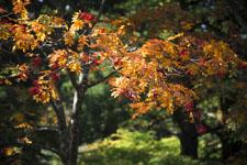 大山の紅葉の画像050