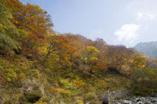 大山の紅葉の画像051