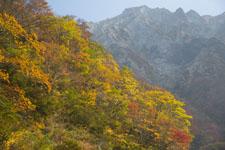 大山の紅葉の画像054