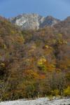 大山の紅葉の画像055