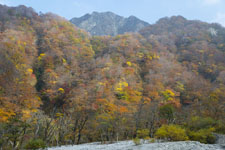 大山の紅葉の画像056