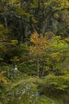 大山の紅葉の画像058