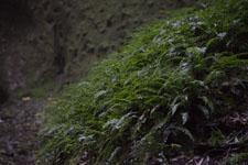 伊尾木洞の画像009