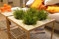 IKEAの机 植物