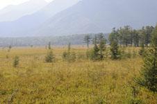 尾瀬の湿原の画像017