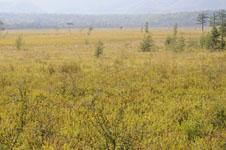 尾瀬の湿原の画像018
