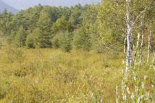 尾瀬の湿原の画像019