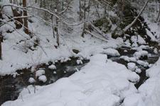 木曽駒高原の川の画像003