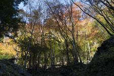 高の瀬峡の紅葉の画像003
