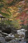 高の瀬渓の川の画像001