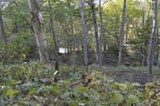 知床半島の森の画像001