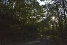 知床半島の森の画像002