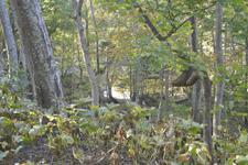 知床半島の森の画像003