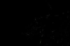 暗闇を舞うホタルの画像001