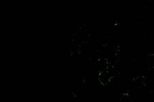 暗闇を舞うホタルの画像002