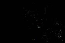 暗闇を舞うホタルの画像004