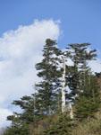 瓶ヶ森の木