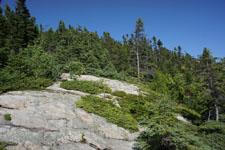 ケベックの森の画像001