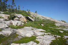 ケベックの森の画像003