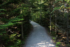 ケベックの森の画像004