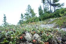 ケベックの花の画像001